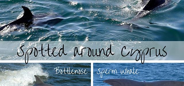 Dolphins around Cyprus