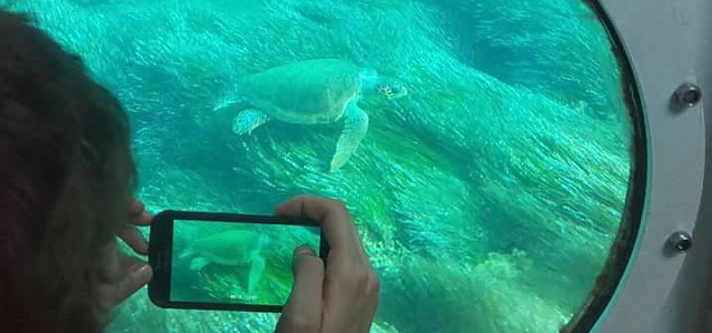 Turtle viewing through the portholes on Atlantis