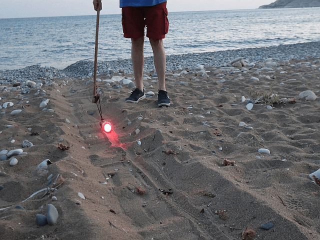 Red torch guiding hatchlings to the sea