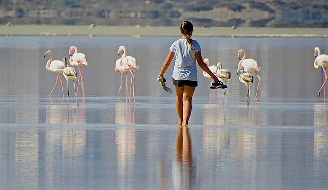 Wading towards flamingos
