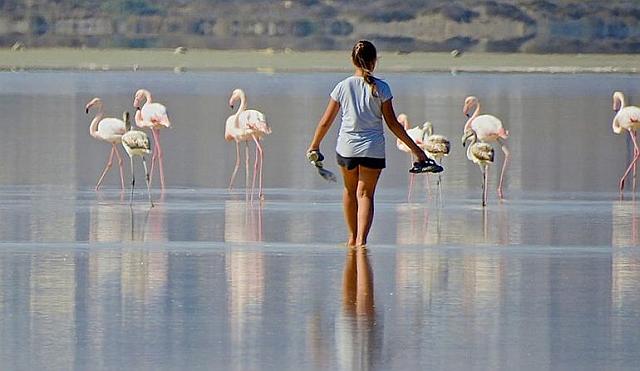 Wading towards flamingos