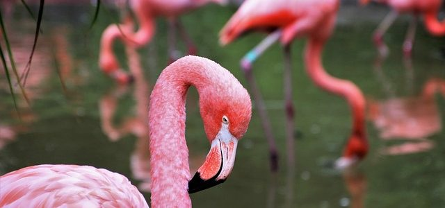 Fabulous pink flamingos