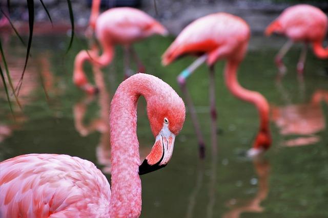 Fabulous pink flamingos